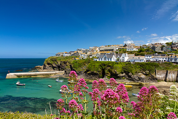 Port Isaac with flowers in the foreground and houses, cliff and harbour below with boats on a clear sunny day.